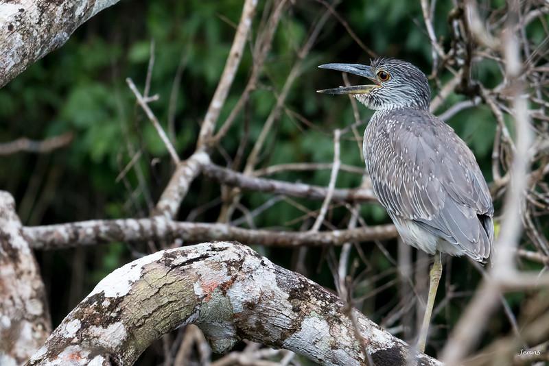 Oiseau _MG_2925.jpg