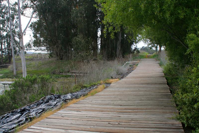 4493 Boardwalk at Slough.jpg