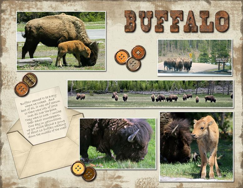 15-Buffalo.jpg