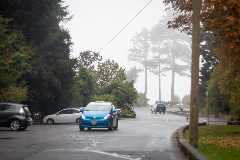 saxe point fog and a stray dog.jpg