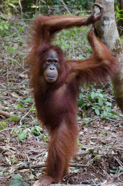 Borneo-2279.jpg