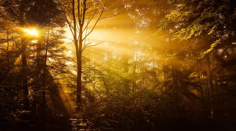 The Magic of Light-279.jpg