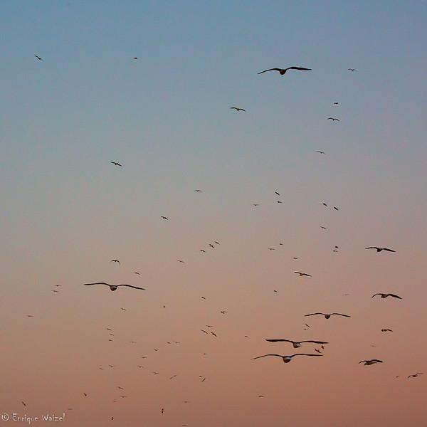 Essaouira dawn.jpg