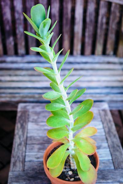 Succulent 0706-.jpg