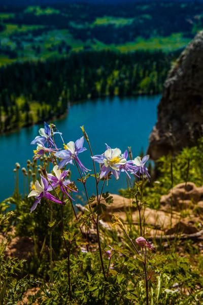 tmophoto_columbine perched over adams lake.jpg