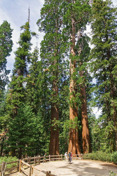 Sequoia -090616-036_HDR_edit.jpg