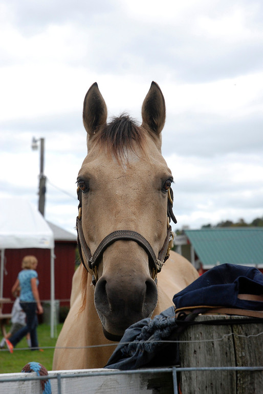 . Kayla Rice/Reformer A horse at Gaines Farm in Guilford.