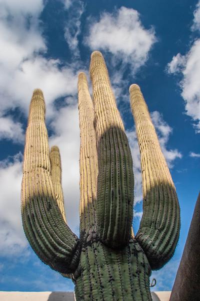 Desert Scenics080.jpg