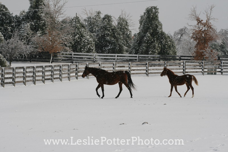Mare and Foal in the Snow After an Ice Storm