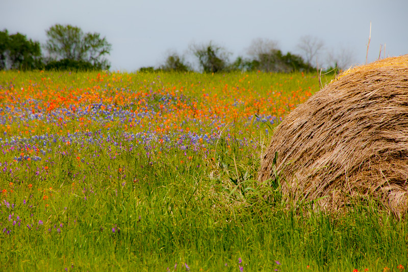 2016_4_9 Texas Wildflower Shoot-8694.jpg