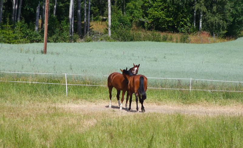 Hästpussar.jpg