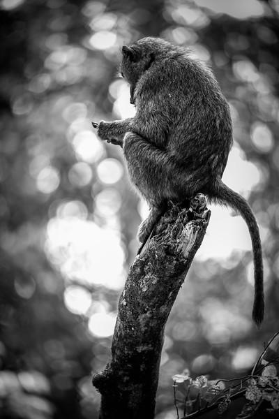 Uganda_T_Chimps-1460.jpg