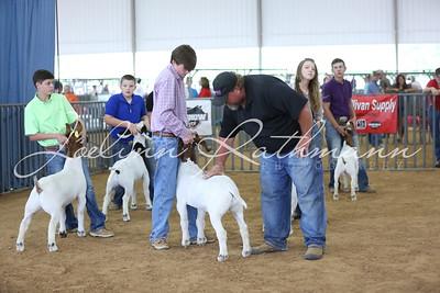 Goat Ringshots