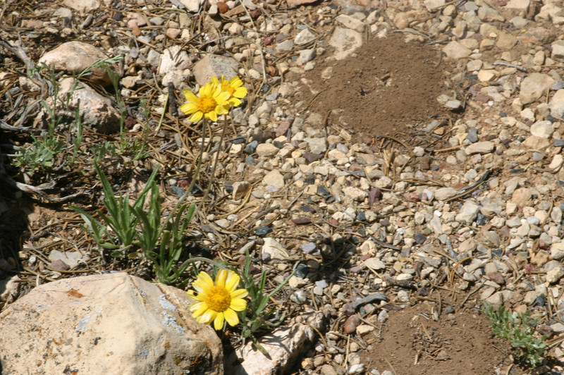 Yellow flowers, unidentified so far, and Mr. Ant Hills.