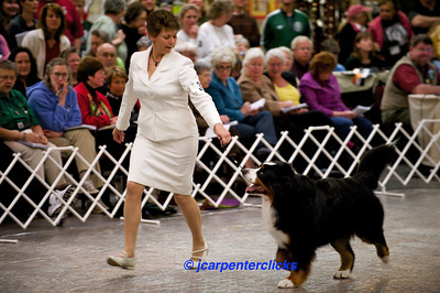 Best of Breed Competition - Group IV - Male Call Backs