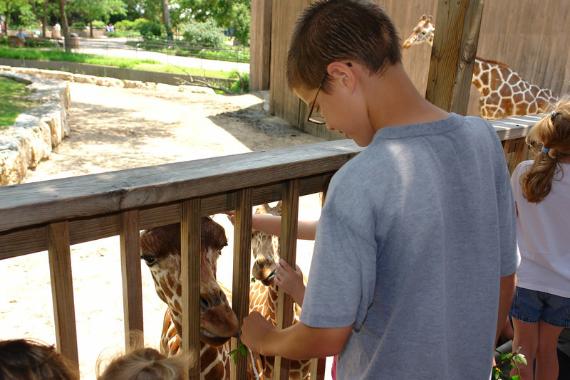 Feeding the giraffes - 4