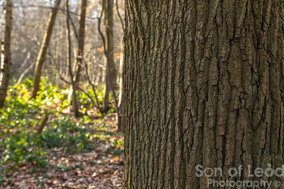 17th Feb Hockley Woods Full