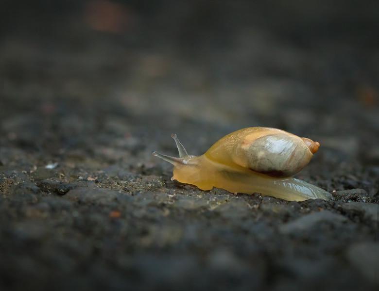 The Slow Crawl Forward