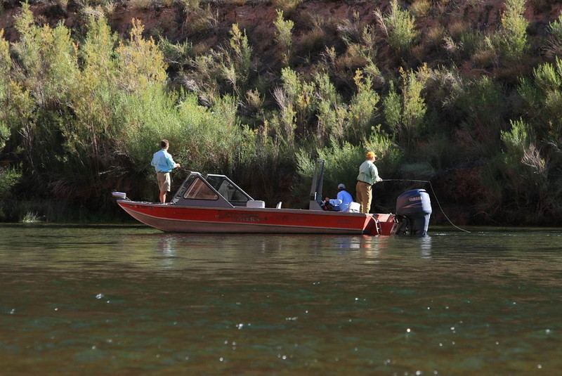 Fishing cicadas in the summer at Lees ferry on the Colorado River.jpg