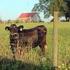 around the farm (37)