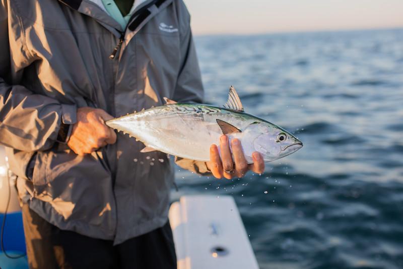 capecodfalsealbacorefishing.bencarmichael (3 of 13).jpg