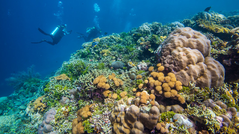 Morotai Island is an island and definitive regency in Halmahera, North Maluku, which is the Northeast Island in Indonesia. Wreck diving has become one of the attractions on Morotai Island.