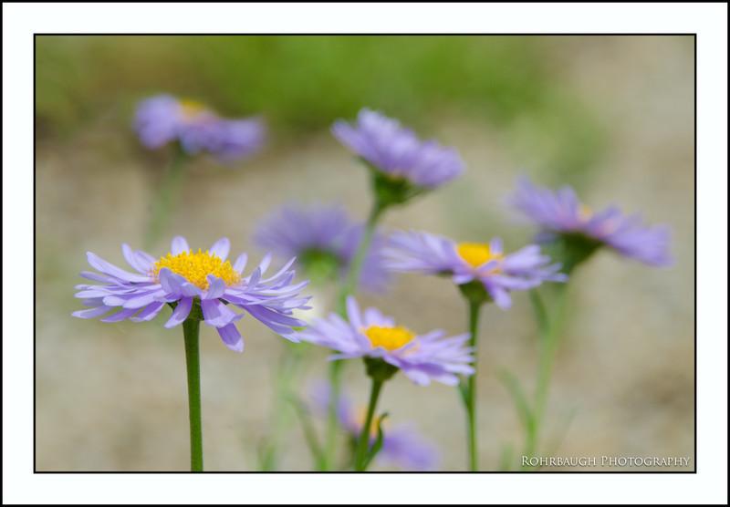 Rohrbaugh Photography Flowers 98.jpg