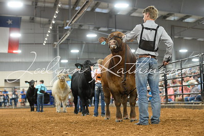 Steer Ringshots - American and British