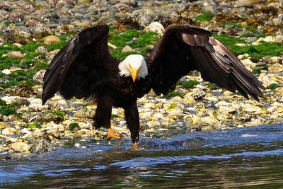 Seabeck Eagles and Herons