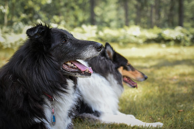 Riley & Skye Unwind in a Traverse City Cabin