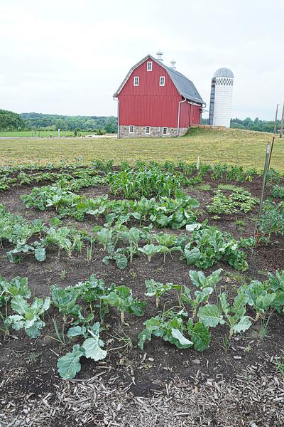 Arboretum, July Harvest-87.JPG
