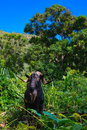 Maui 2014 - Landscape