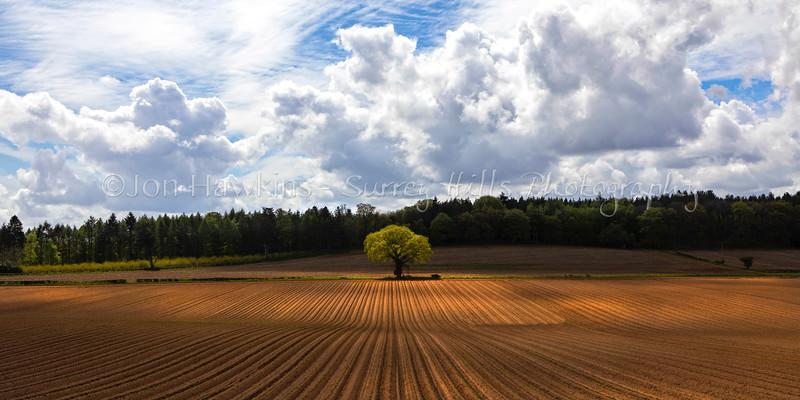 The Lone Oak , Seale, Surrey