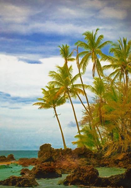 Palmtrees6-21.jpg
