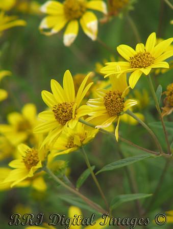 Colorado Flowers Folder