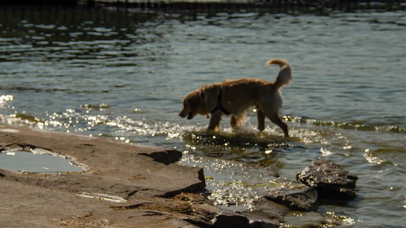 PuppyParty18-662.jpg