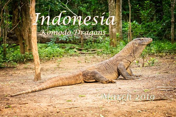 Indonesia - Komodo Dragons