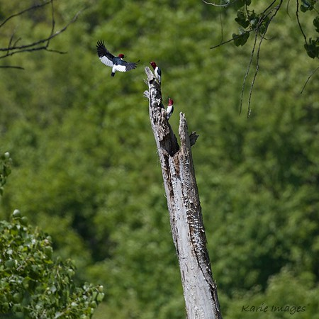 Southern Birds