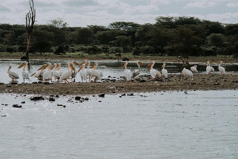Tu-Nguyen-Destination-Wedding-Photographer-Kenya-Masai-Mara-Elopement-Doris-Sam-58.jpg