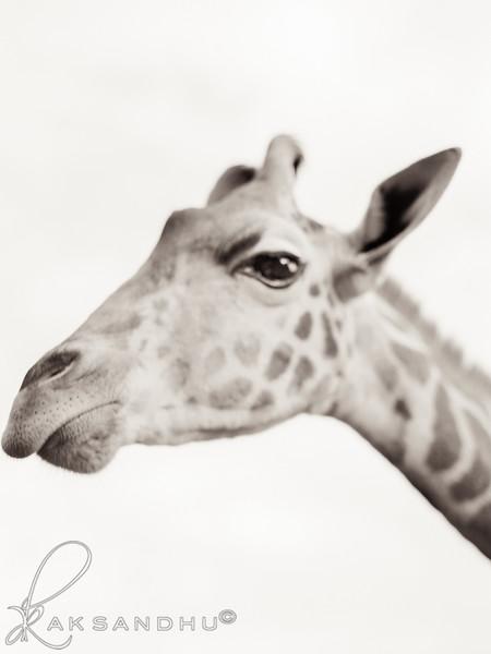Safari-Africans-134.jpg