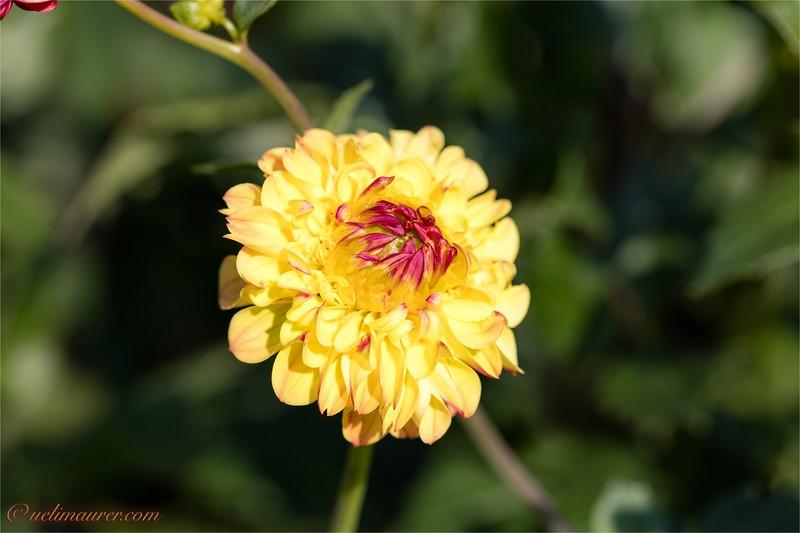 Blumen zum Selberschneiden - 2015-08-13- 0U5A1469.jpg