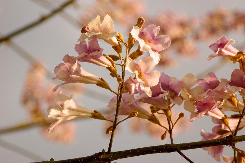 Spring_DSC_4423.jpg
