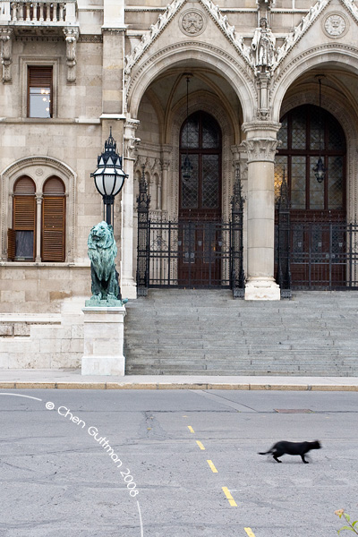 House of Parliament entrance; A cat goes by the big statue of a lion.