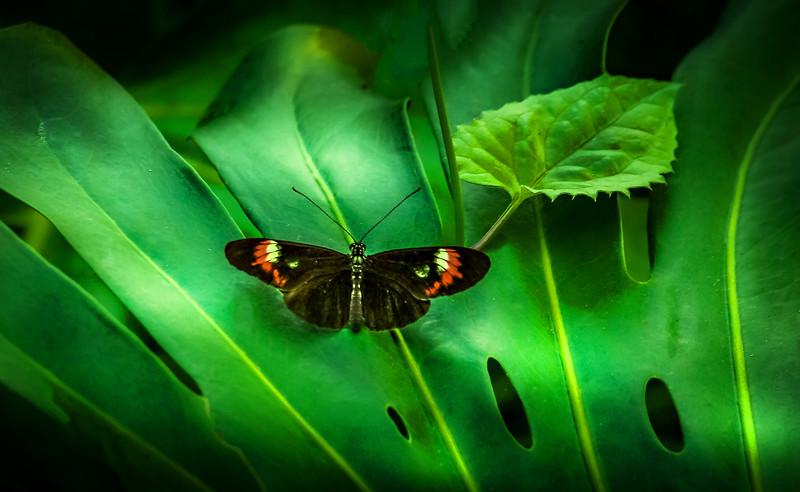 Butterfly-014.jpg