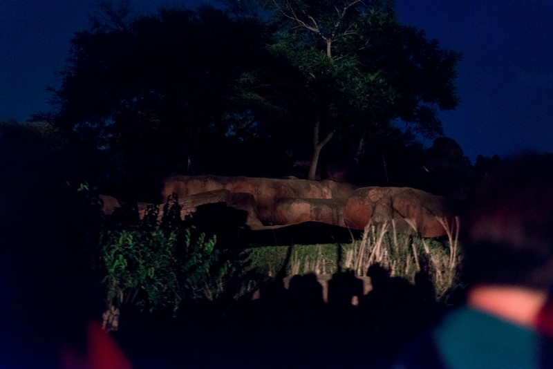 Kilimanjaro Safaris at Night - Lion Rock - Disney's Animal Kingdom, Walt Disney World