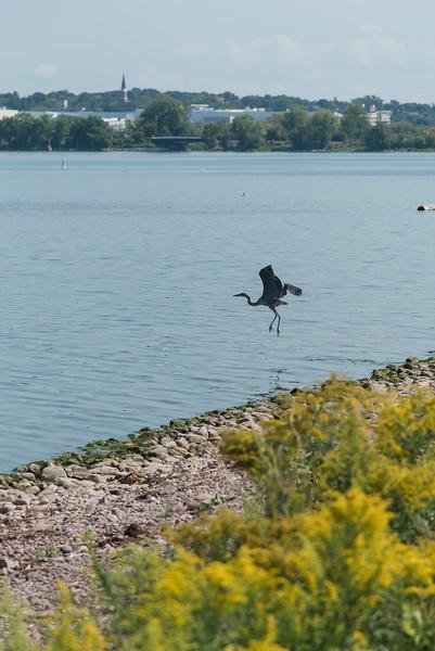 Fishing at Onondaga Lake Sept 2020-11.jpg