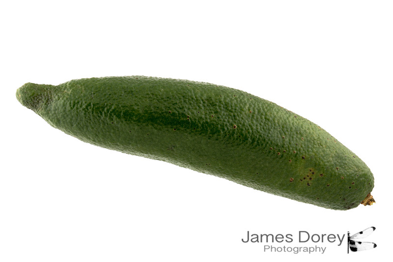 Green finger lime 9p 100mm 1-3.jpg