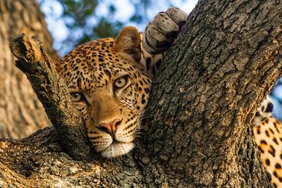Wildlife in colour