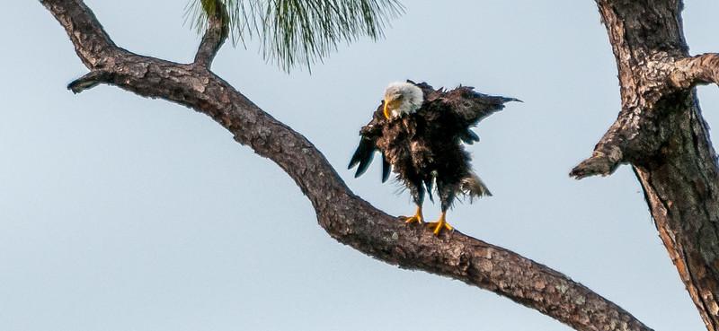 Eagles 4-4-077.jpg