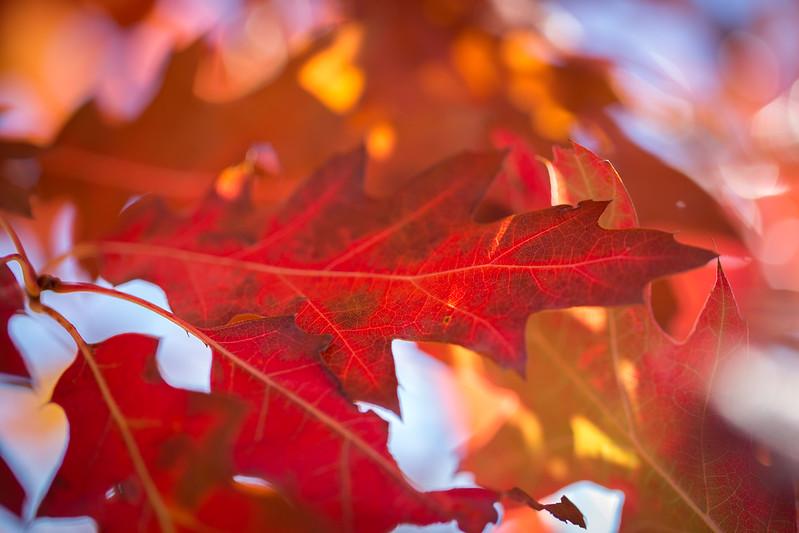 20151024-Fall Colors-77.jpg
